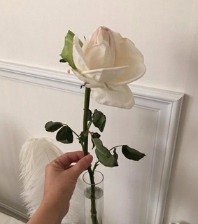 beautiful, flower and hand