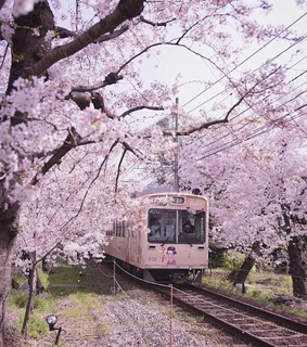 pink, flowers and train