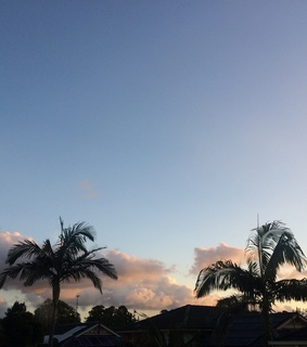 blue sky, sunset and palm trees