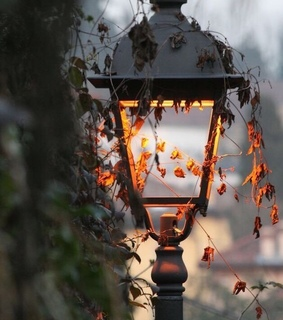 leaves, lamp and october
