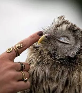 harry potter, owl and cute