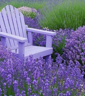 chair, lavender and nature