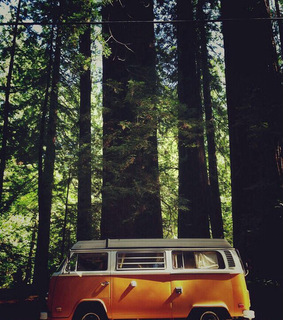 wanderlust, trees and forest