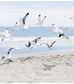 birds, beach and theme