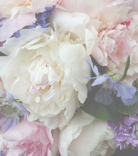 pastel flowers background, pastel purple and cute