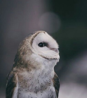 cute, nature and owl