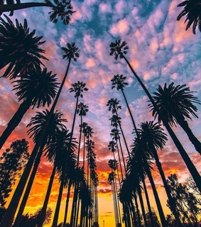 amazing, palms and vacation