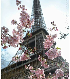eiffel tower, flowers and france