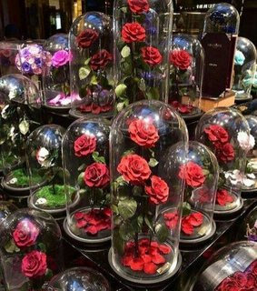 souvenirs, red rose and roses