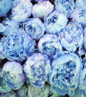 blue peony background, blue peony and spring flowers