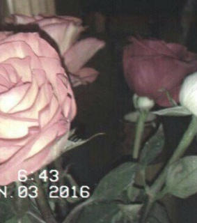 sad, roses and cry