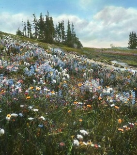 wildflowers, spring and nature