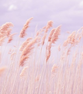 pastel, cute and pastel pink