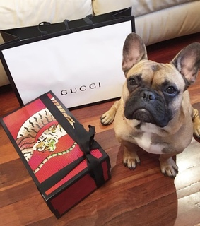 luxury, expensive and bulldog