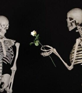 rose, skeleton and love