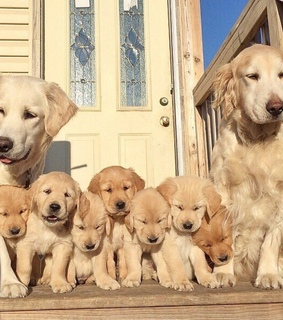 dogs, cute and family