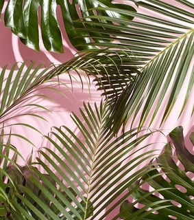 plant, pink and aesthetic