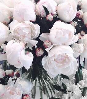 aesthetic, flowers and white