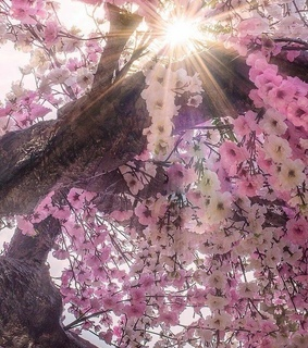 photography, spring and blossoms