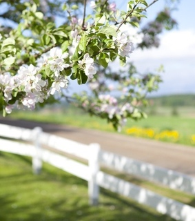 spring, country living and farm