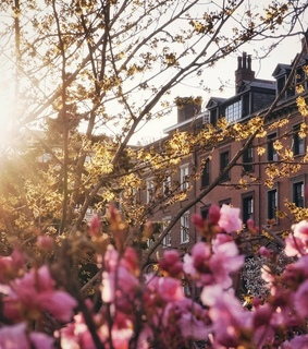 photography, flowers and travel
