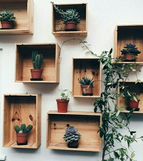 plants, decoration and indie