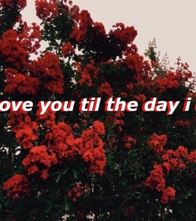 5sos, aesthetic and roses