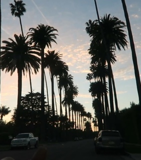 palm trees, sky and blue