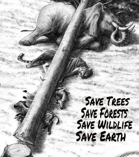 drawings, save the nature and sad truth