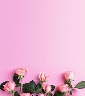 flowers, pink and roses
