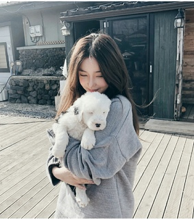animal, pretty and puppy
