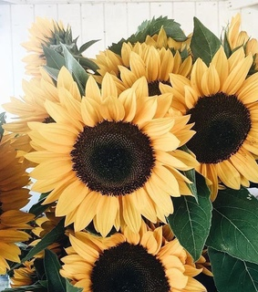 yellow, sunflower and aesthetic