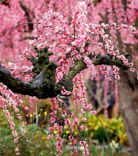 nature, spring and pink