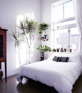 bed, plant and room
