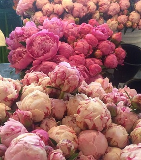 peonies, pink and beautiful