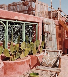 cactus, pink aesthetic and cacti and desert plants
