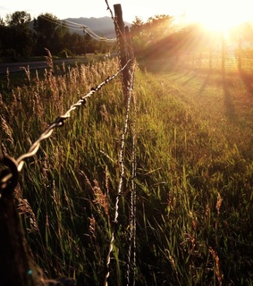 rural, country living and fence