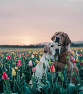 dogs, nature and beautiful