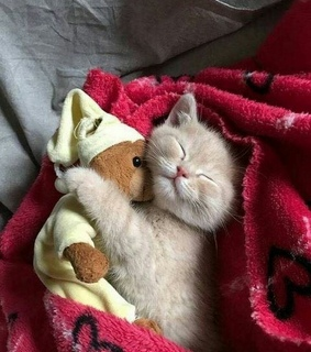 cuddle, adorable and saturday