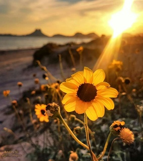 sunset, flowers and photography
