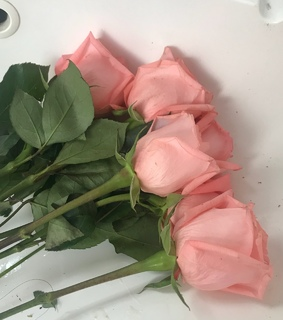 pink, roses and pastel