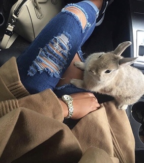car, denim and bunnies