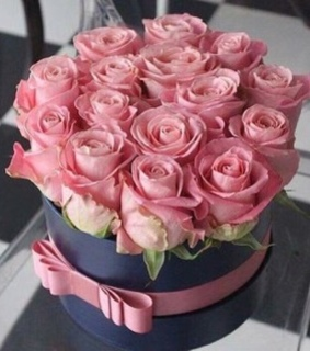 beautiful, pink rose and luxury