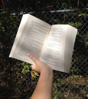 nature, book and fence