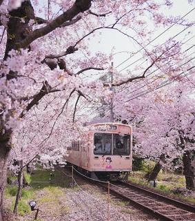 spring, japanese and asian