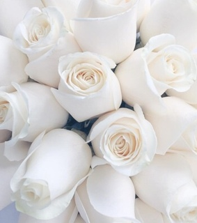 flowers, white roses and roses