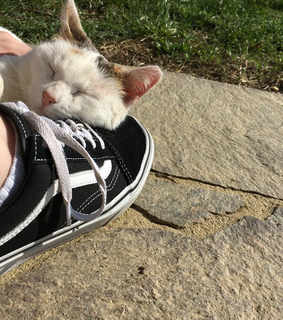 cat, style and vans