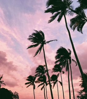 palms, place and photography