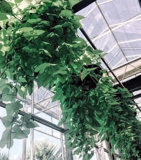 architecture, leaves and greenhouse