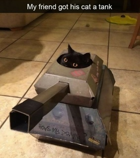 cats, pets and fails